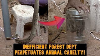 WATCH: Snake Bears The Brunt Of Inefficient Forest Dept Perpetuating Animal Cruelty!