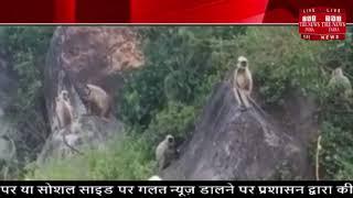 टापू में फंसे 100 monkey को तेजधार के बीच में से निकाला गया