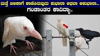 ಮತ್ತೆ ಬಿಳಿಕಾಗೆ ಕಾಣಿಸಿರುವುದು  ಶುಭಾನಾ ಅಥವಾ ಅಶುಭಾನಾ... ಗಂಡಾಂತರ ಕಾದಿದ್ಯಾ.. || significance of white crow