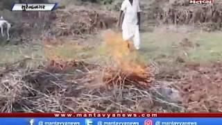 Surendranagar: ખેડૂતે પોતાના ખેતરમા પાક સળગાવ્યો