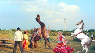 New Dj Rasiya Video Song    गोरिन ते - Gorin Te    Rajasthani Sekhawati