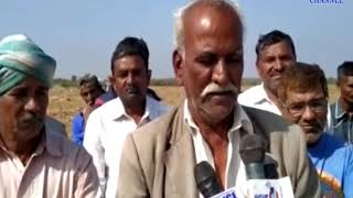 Kanakpar   Sorghum fodder was collected from 3 acres of land   ABTAK MEDIA