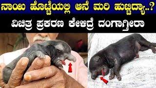 ನಾಯಿ ಹೊಟ್ಟೆಯಲ್ಲಿ ಆನೆ ಮರಿ ಹುಟ್ಟಿದ್ಯಾ..? ವಿಚಿತ್ರ ಪ್ರಕರಣ ಕೇಳಿದ್ರೆ ... || Dog Born With Elephant Trunk