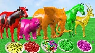 Impara i colori in inglese con palloni da calcio, spinner, camion dei pompieri e perline Para Niños.
