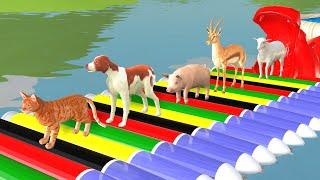 Pelajari warna-warna dengan warna permen karet dan balon hewan | jari keluarga warna lagu #5