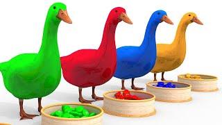 Pelajari warna dengan hewan unggas makan kartun beras untuk anak anak. #21