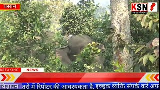 कटघोरा/पसान/तड़के हाथियों का दल मरवाही रेंज के परिक्षेत्र से 2 कि.मी. मुड़ी मोहल्ला में जमा हुआ.....