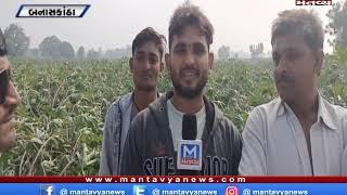 બનાસકાંઠા - સુઇગામ વિસ્તારમાં કમોસમી વરસાદના કારણે ખેડૂતો ચિંતમાં