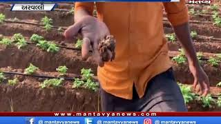 અરવલ્લી - બટાકામાં નકલી બિયારણની આશંકા,એલઆર બટાકાની જાતમાં ખેડૂતોને નુકસાન