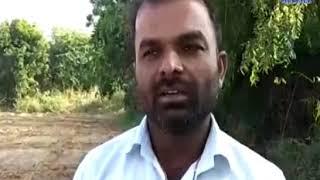 Kutch| Ravipak failed due to poor rainfall| ABTAK MEDIA
