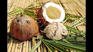 भगवान के नारियल चढ़ाते समय नारियल निकल जाए खराब.. तो हो जाये सावधान