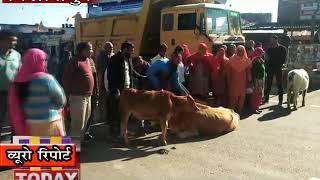 17 dec n 7 b 2 बिलासपुर में बढ़ रही आवारा पशुओं की समस्या से नाराज किसानों ने जमकर हंगामा किया