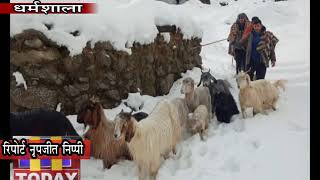 18 DEC N 7 भेड़-बकरियों संग फंसे भेड़पालकों के लिए नोडल क्लब मोरछ के युवक फरिश्ता बनकर आए।