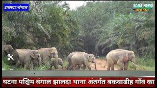 #Breaking# जंगली हाथी नें पटक पटक के एक को मार डाला घटना पश्चिम बंगाल झालदा थाना अंतर्गत बकवाडीह का