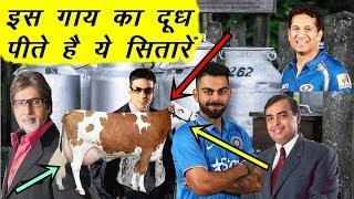 इस गाय का दूध पीते है ये सितारें | News Remind