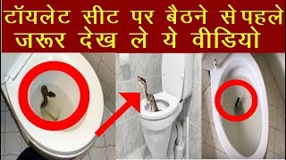 Morning Breaking News | Venomous Snake Found In Toilet | Toxic Snake In Toilet | Snake In Tiolet
