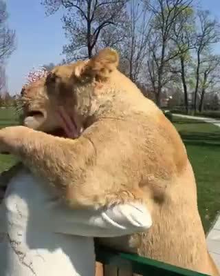 जब शेरों ने लगाया महिला को गले से