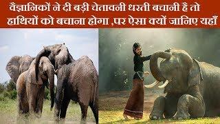 वैज्ञानिकों ने दी बड़ी चेतावनी धरती बचानी है तो हाथियों को बचाना होगा ,पर ऐसा क्यों जानिए यहाँ
