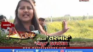 મંતવ્ય વિશેષ : તીડનો 'તરખાટ' 'ખેડૂત' બરબાદ 24/12/2019 Mantavyanews