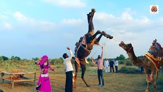 New Dj Rasiya Video Song || Rasiya Dance Video Song 2019 || Rajasthani Sekhawati