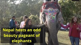 Nepal hosts an odd beauty pageant of elephants