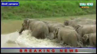 सिल्ली में हाथियों का आतंक जारी,खेतों में लगे फसल व खलिहान में रखे धान किया बर्बाद