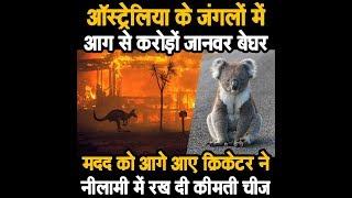 Australia के जंगलों में आग से करोड़ों जानवर बेघर.मदद को आगे आए क्रिकेटर ने नीलामी में रखी कीमती चीज