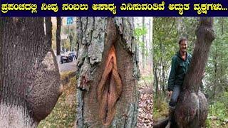 ಪ್ರಪಂಚದಲ್ಲಿ ನೀವು ನಂಬಲು ಅಸಾಧ್ಯ ಎನಿಸುವಂತಿವೆ ಅದ್ಭುತ ವೃಕ್ಷಗಳು... ಅಬ್ಬಬ್ಬಾ... || Funny Tree Shapes