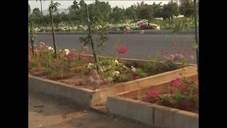 Beautiful road garden || Amaravati seed access road || social media live