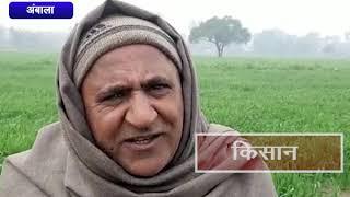 बारिश और ओलावृष्टि से हुआ नुकसान     ANV NEWS AMBALA - HARYANA