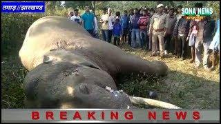 ग्यारह हजार वोल्टेज बिजली के तार से एक जंगली हाथी की मौत,घटना तमाड़ थाना क्षेत्र के परासी गांव की