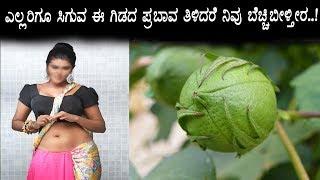 ಯಾರಿಗೂ ತಿಳಿಯದ ಈ ಗಿಡದ ರಹಸ್ಯ - Kannada Health Benefits Latest Episode 1