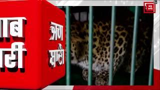 Snowfall में रिहायशी इलाके में घुसे Leopard का आतंक, ग्रामीणों पर किया हमला