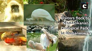Visitors flock to 'Nandankanan Zoological Park' in Bhubaneswar