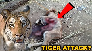 Tiger On Prowl In Dharbandora?. Locals Scared, Inform Forest Department