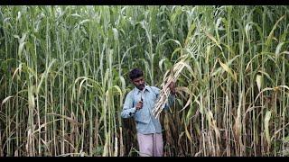 Goan Sugarcane Farmers Feel Cheated