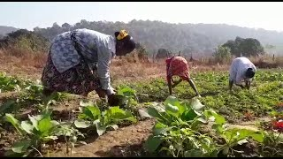 WATCH: Success story of women farmers in vegetable cultivation at Sattari