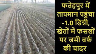 Weather News | Fatehpur में Temperature पहुंचा -1.0 डिग्री, खेतों में फसलों पर जमी बर्फ की चादर