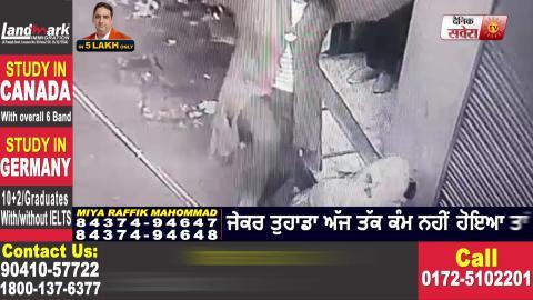 Jalandhar में बच्चे पर Pit Bull का हमला, देखिए तस्वीरें