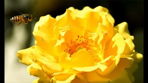 Rohani Wazifa For Love Marriage   gurumaa ji 8437857317