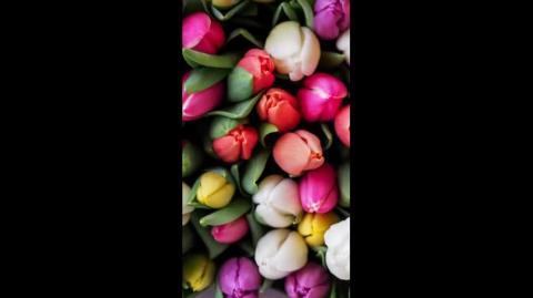 Strong Taweez for Love, Strong Wazifa for Hajat   gurumaa ji 8437857317