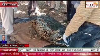 देवास-जिले में लगातार तेंदुए का शिकार हो रहा है कही तो तेंदुए को चालाकी से मारा जाता है