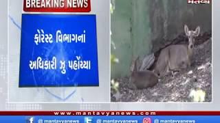 Rajkot: પ્રદ્યુમન પાર્કમાં દીપડો ઘુસતા અફરાતફરી
