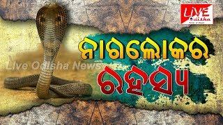 ନାଗଲୋକର ରହସ୍ୟ || NAGLOK JASHPUR || Naag Lok Treasure Mystery