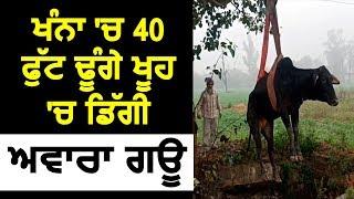 Khanna में 40 फुट गहरे कुँए में गिरी आवारा गाय
