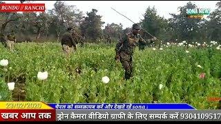 BUNDU,अफीम तस्करों को लेकर बुंडू पुलिस की बड़ी कारवाई 10 एकड़ अफीम के खेती को किया नष्ट
