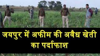 Jaipur   अफीम की अवैध खेती का पर्दाफाश, ग्रामीण पुलिस की बड़ी कार्यवाई   JANTV