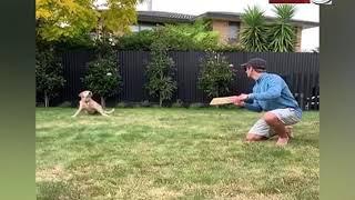 कीवी कप्तान विलियमसन के पास करामाती डॉगी, लपकता है स्लिप में 'कैच'