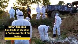 Bihar disposes hundreds of chicken in Patna over bird flu cases