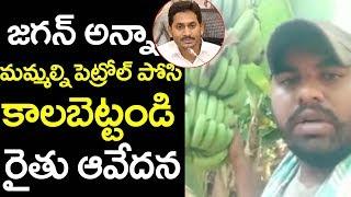 మమ్మల్ని కాల్చేయండి  రైతు ఆవేదన! | Farmer Affected By Present Disease In AP | CM Jagan | Lockdown